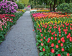 "Skagit County, WA               <br /> Gravel pathway through the colorful spring flowering tulips beds in the RoozenGaarde garden.     ""Courtesy of the Washington Bulb Co. Inc."""