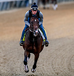 LOUISVILLE, KENTUCKY - MAY 01: Omaha Beach, trained by Richard Mandella, exercises in preparation for the Kentucky Derby at Churchill Downs in Louisville, Kentucky on May 1, 2019. John Voorhees/Eclipse Sportswire/CSM
