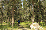 Israel, Lower Galilee, Bike Trail at Zippori (Kiryat Ata) Forest
