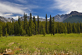 Rocky mountains from close to Elkwood camp ground, Peter Lougheed Provincial Park, Kananaskis
