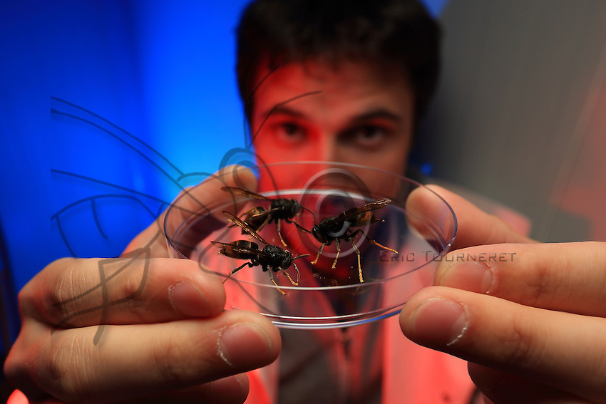 "Antoine Couto, 28 years old, doctoral student at the CNRS (national center for scientific research) of Gif sur Yvette. He studies the behavioral neurophysiology of the Asian hornet and seeks to discover which pheromones induce predatory action in the Asian hornet. That could allow for a sort of ""counterattack"" by injecting these pheromones into the hornets' nest and thus deregulate their social behavior. The hornets' nest would self-devour itself... ///Antoine Couto, 28 ans, étudiant en doctorat au CNRS de Gif sur Yvette.Il travaille sur la neurophysiologie comportementale du frelon asiatique et cherche à découvrir quelles sont les phéromones induisent une action de prédation chez le frelon asiatique, ce qui peut permettre de trouver une riposte en injectant ces phéromones dans le nid de frelon et déréguler ainsi son comportement social. Le nid de frelon s'autodévorerai…"