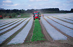 ADD2W4 Tractor removing protective sheets from a field of potatoes Butley, Suffolk. England