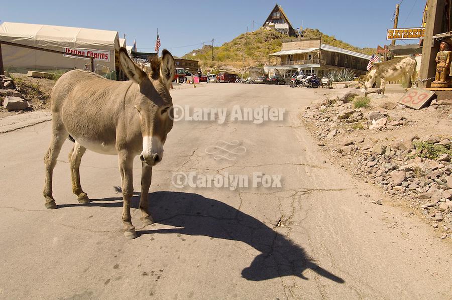Jackass in the road, downtown Oatman, Ariz., along old Historic Route 66