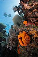 Snorkelers, Pennekamp Coral Reef State Park, Key Largo, Florida