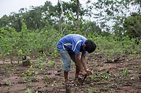"""A supporter of former Bolivian President Evo Morales, known as coca grower """"cocalero"""", works in a farmer's plot, in Entre Rios, Chapare province, Bolivia. November 27, 2019.<br /> Un partisan de l'ancien président bolivien Evo Morales, connu sous le nom de cultivateur de coca """"cocalero"""", travaille dans une parcelle agricole, à Entre Rios, province du Chapare, Bolivie. 27 novembre 2019."""