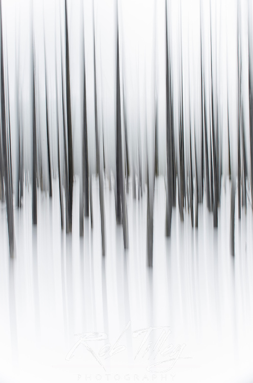 USA, Wyoming, Yellowstone NP,Winter Forest Abstract