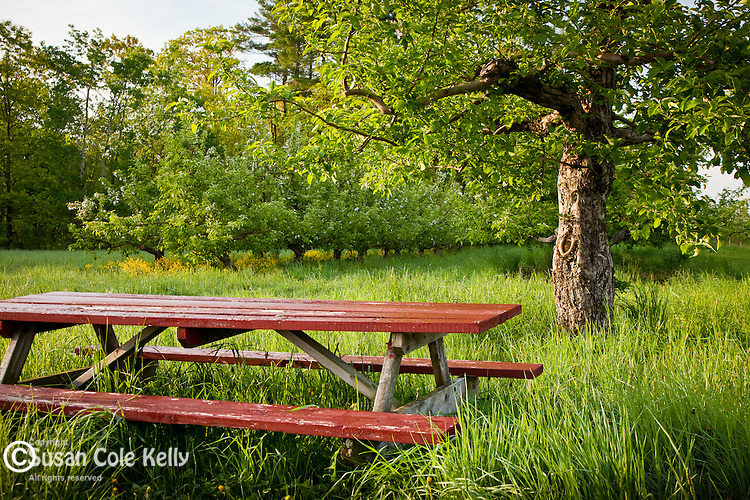 An apple orchard on the Apple Way scenic byway in Londonderry, NH, USA