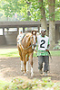 Smarty 'n Me at Delaware Park on 5/28/12