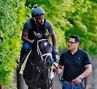 BALTIMORE, MD - MAY 18: Always Dreaming walks back from the track after exercising in preparation for the Preakness Stakes this Saturday at Pimlico Race Course on May 18, 2017 in Baltimore, Maryland.(Photo by Scott Serio/Eclipse Sportswire/Getty Images)