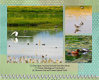 March 2011 Birds of a Feather Calendar