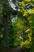 A forest trail winds its way through the trees at Isle Royale National Park, Keweenaw County, Michigan