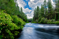 Metolius River with flowering bushes, Oregon
