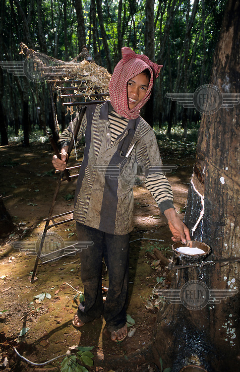 A woman wearing a checked krama (a traditional Khmer scarf) while working on a rubber plantation.