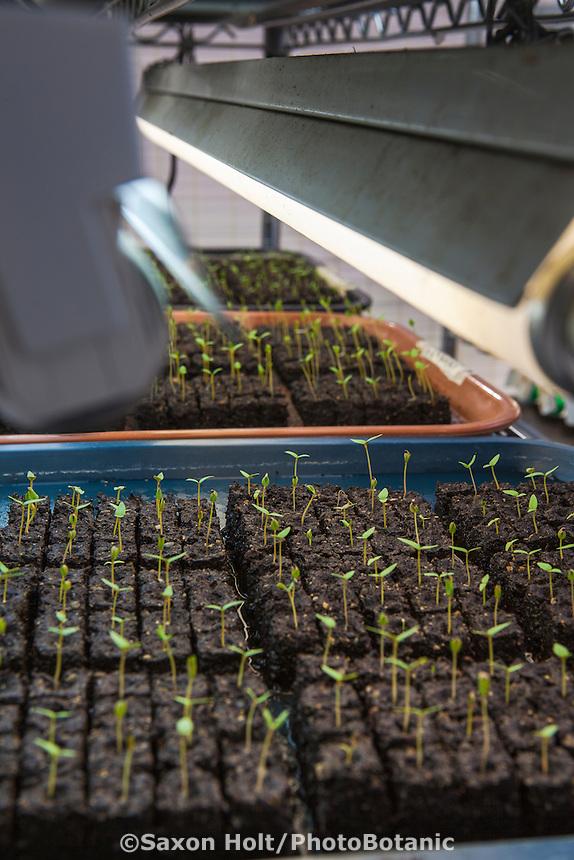 Grow lights over flower starts plugs