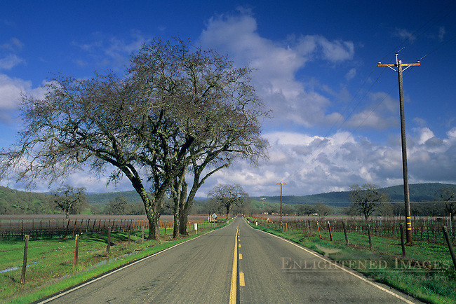 Vineyard and road, Pope Valley, Napa County, California