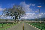 Vineyard and road, Pope Valley, Napa County, California