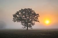 Cotswolds (Winchcombe), Gloucestershire, England