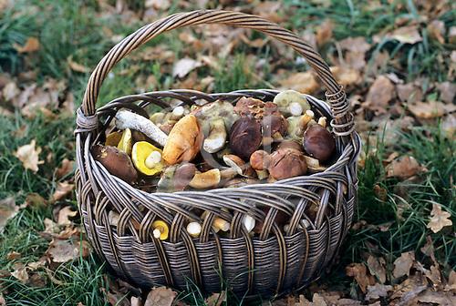 Poland. Old basket of wild mushrooms.