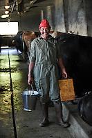 SWITZERLAND Kanton Wallis agriculture in the mountains, Erringer cows in milking stable of Philippe Frossard, the milk is the base of Raclette cheese / SCHWEIZ Kanton Wallis, Landwirtschaft auf Alpen zur Beweidung von Flaechen und Vermeidung von Verbuschung der Kulturlandschaften, Melker beim Melken der Erringer Kuehe im Stall des Milchbauer Philippe Frossard auf der Alpe Vacheret, aus der Milch wird der Raclette Kaese hergestellt