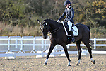 Class 9. Advanced Medium 85. British Dressage. Brook Farm training centre. Essex. UK. 11/11/2017. ~ MANDATORY CREDIT Garry Bowden/Sport in Pictures - NO UNAUTHORISED USE - +44 7837 394578