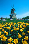 "The Dutch windmill ""De Zwaan"" on Windmill Island in Holland, Michigan, a 240 year old working windmill during the Tulip Festival."