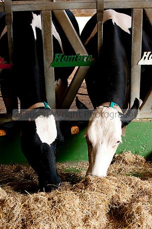 Hombre Farm in Modena, Emilia Romagna, Italy