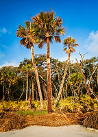 Coastal Forest, Hunting Island State Park
