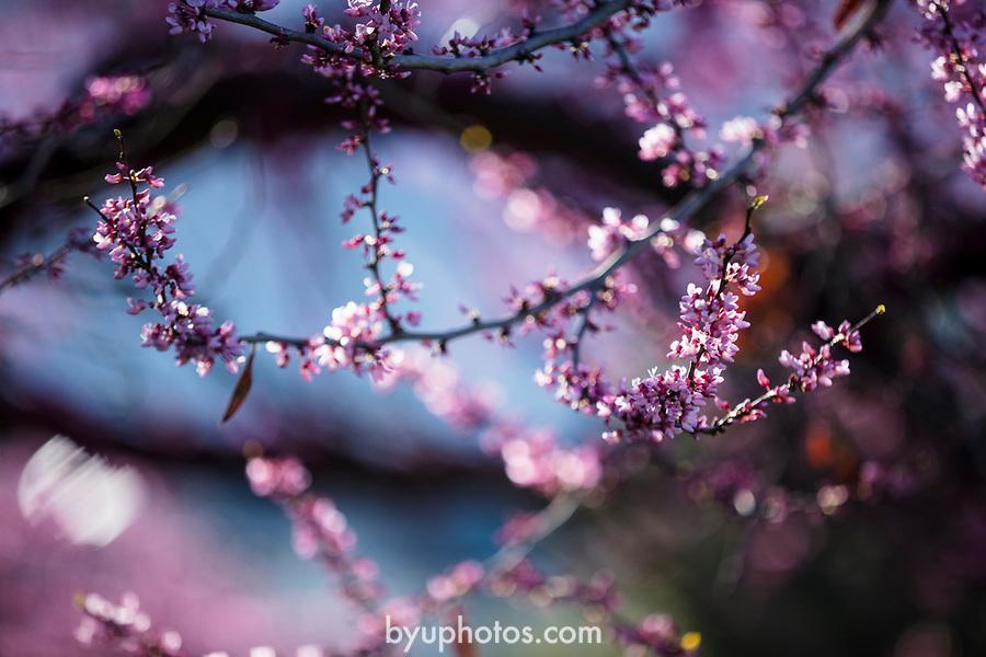 _YU10039<br /> <br /> 1704-06 GCS Spring<br /> <br /> April 5, 2017<br /> <br /> Photography by Nate Edwards/BYU<br /> <br /> © BYU PHOTO 2016<br /> All Rights Reserved<br /> photo@byu.edu  (801)422-7322