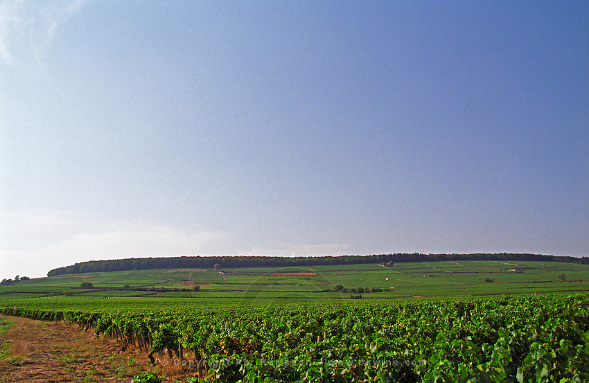 The Corton hill in Aloxe seen from afar. Bourgogne