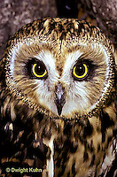 OW05-045z   Short-eared Owl - close-up of face -  Asio flammeus