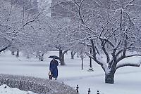 Public Garden winter, Boston, MA