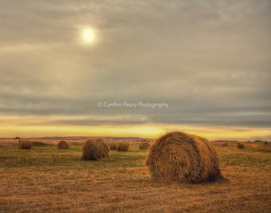 Hay Bales in the golden sun of Nebraska