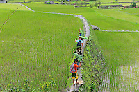 PHILIPPINES, Ifugao Province, Cordilleras, Banaue, Hunduan, rice farming on Hapao rice terraces in mountains, children on their way to school, protecting themselves from rain with banan leaves / PHILIPPINEN, Banaue, Hapao Reisterrassen, Reisanbau und Reisfelder in den Bergen bei Hunduan, Kinder auf dem Weg zur Schule im Regen