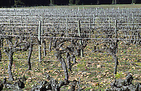 vineyard chateau de campuget rhone france