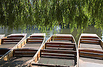 Punts ready for hire in shade of willow tree on the River Cam, Cambridge, England