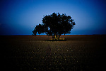 TIME, Arapahoe County Assignment..Small towns in far eastern Arapahoe County.  Byers, Deer Trail, Aurora, Watkins....A tree in the middle of a plowed field in rural Byers, Colorado.  Although property values in the Denver metropolitan area have skyrocketed in recent decades, the economic situation in eastern Colorado remains subdued.  Arapahoe County is one of the most populous counties in the United States, though encompasses a large swath of rural, eastern Colorado.