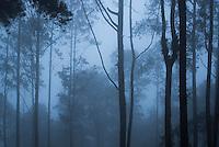 Misty forest at night, Lake Toba (Danau Toba), North Sumatra, Indonesia