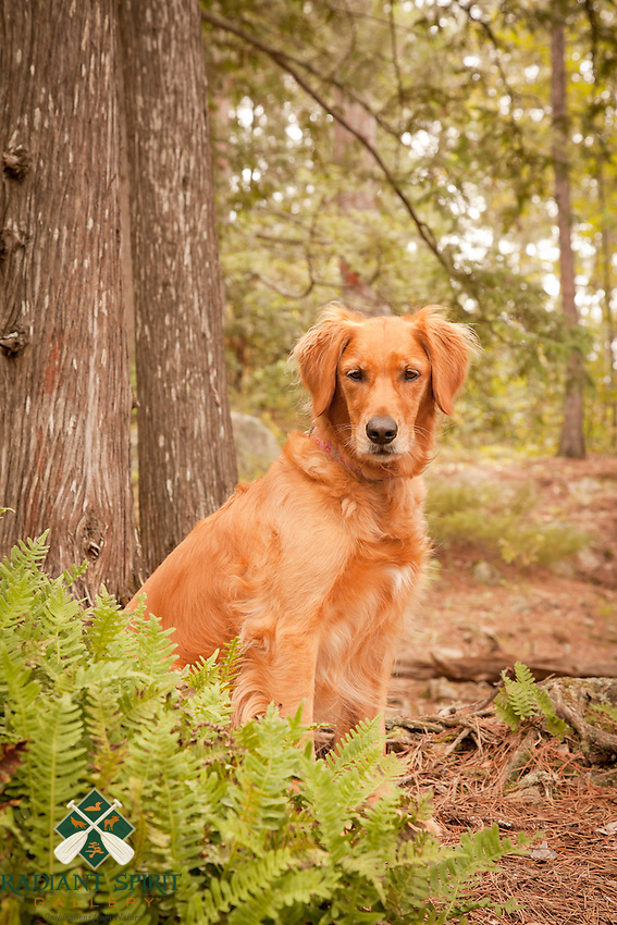 &quot;A Heart of Gold&quot;<br /> <br /> Daisy and I enjoy wilderness camping adventures in Quetico Provincial Park in Canada.