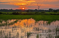 Setting sun over flooded Rice fields during the Monsoon Season in the Rural area just outside Battambang, Cambodia