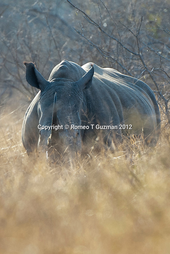 July 24, 2012: Lower Sabie in Kruger National Park in South Africa