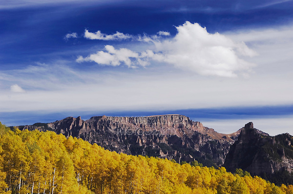 Mountain peak and Aspen trees with fall colors, Uncompahgre National Forest, Colorado, USA