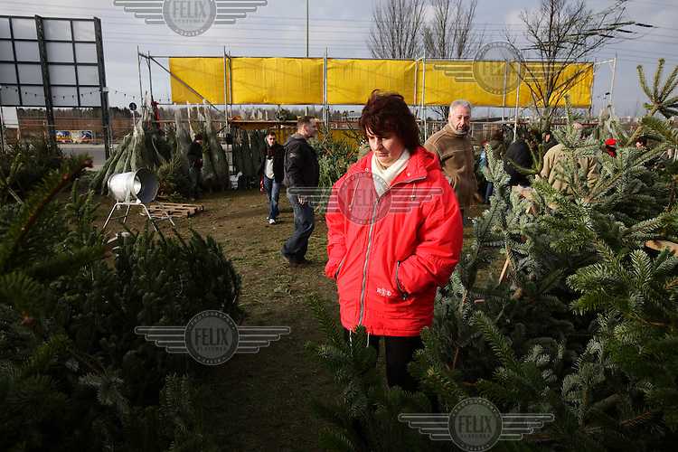 A woman chooses a Christmas tree in Treptow, part of former East Berlin.