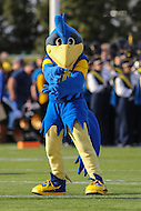 Newark, DE - October 29, 2016: Delaware Fightin Blue Hens mascot poses during game between Towson and Delware at  Delaware Stadium in Newark, DE.  (Photo by Elliott Brown/Media Images International)