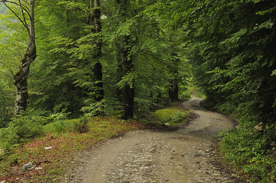 Mountain road through a beech forest. Thethi National Park, Albania June 2009