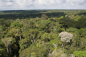 Amazon, Brazil. Overview of the canopy from above.