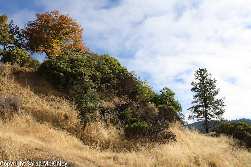 A blue October sky and white clouds cover a hilly landscape of dry grass, shrubs, and trees in autumn color along Reynold's Highway outside of Willits in Mendocino County in Northern California.