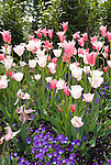 Washington DC; USA: Spring flowering in Washington DC, especially of tulips.Photo copyright Lee Foster Photo # 30-washdc79550