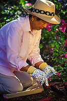 Elderly asian woman gardening in her yard