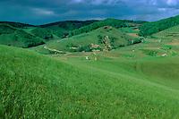 Kaiserstuhl, Weinberg, Weinberge, Weinanbau, Baden-Württemberg, Deutschland)