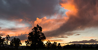 Clouds formation and totara trees at sunset, West Coast, New Zealand, NZ